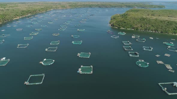 Thumbnail for Fish Farm in the Sea