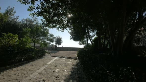 Thumbnail for Paved alley in a park