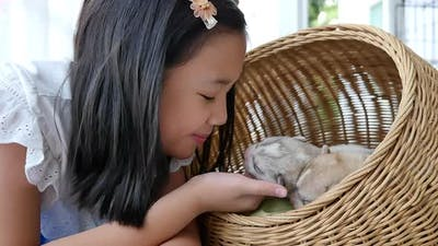 Asian Girl Playing With Siberian Husky Pupies