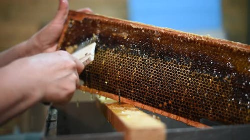 Honey Extraction Process. Footage of a Beekeeper Uncapping Honey Cells on the Hive Frames.