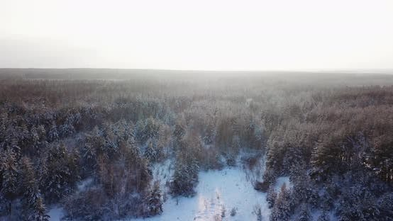 Thumbnail for Aerial Flying Over the Snowy Tops of Trees of a Winter Pine Forest on a Sunrise