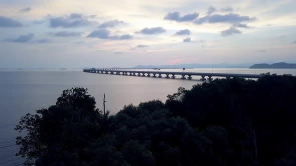 Mangrove trees at coastal Penang Second Bridge
