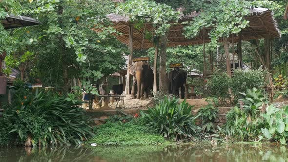Thumbnail for Elephants