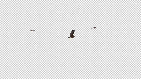 Thumbnail for Tropical Kites - Three Birds - Flying Loop