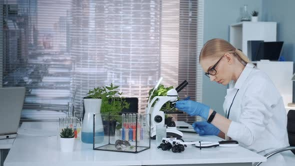 Thumbnail for Smart Female Scientist in Lab Coat Working with Microscope in Chemistry Lab