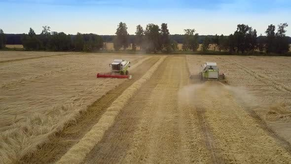 Thumbnail for Combines Harvest Rich Wheat Crop Making Straw Rolls in Field