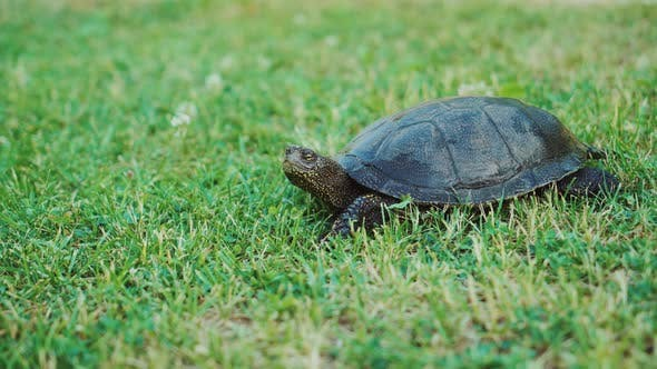 Cover Image for Turtle Crawling on the Ground Among the Plant