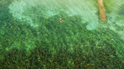 Tourists Snorkeling in Coral Reef Moalboal Philippines