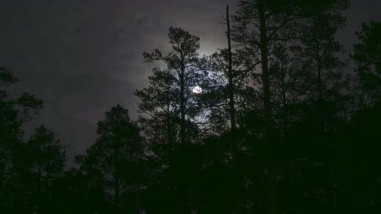 Thumbnail for Night Mysterious Panoramic Landscape in Cold Tones - Silhouettes of the Spruce Forest Under the Full