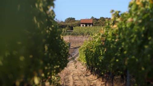 Wonderful Winery