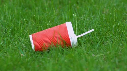 Plastic Cup on Grass in Park, Littering Problem, Human Impact on Environment