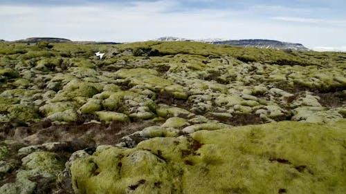 Eldhraun Lava Field