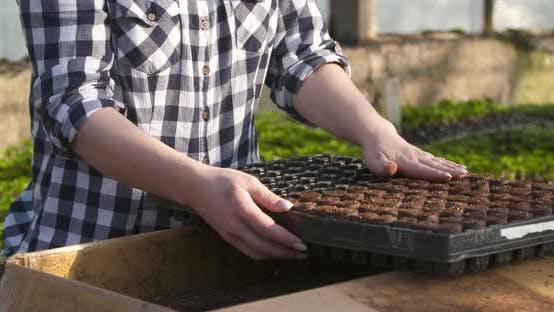 Cover Image for Close Up of Female Gardener Arranges Seedlings