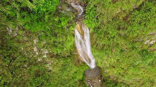 Waterfall in the Tropical Jungle Top View