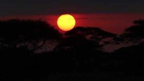 Perfect African Sunrise