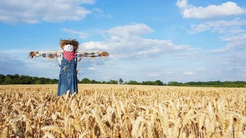 Timelapse of a Scarecrow
