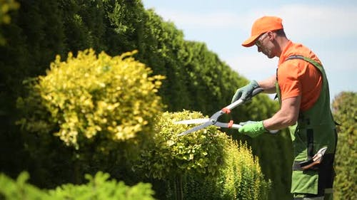 Spring Plants Trimming by Professional Caucasian Gardener
