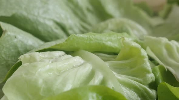 Thumbnail for Slow tilt on Lactuca sativa salad  4K 2160p 30fps UltraHD footage - Heap of lettuce leaf vegetable c
