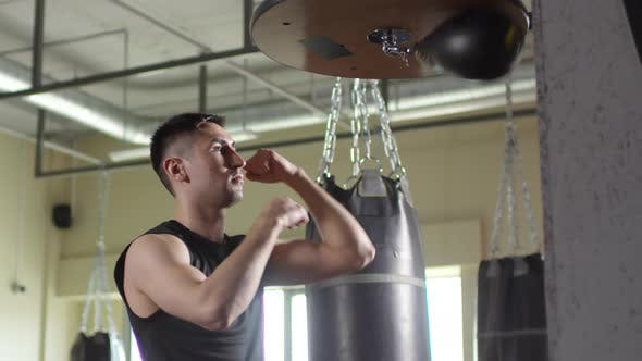 Thumbnail for Professional Boxer Training with Speed Bag in Gym