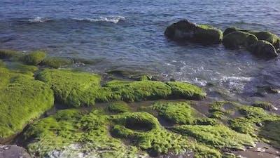 Seaweed Aquatic Flora Plant at Sea
