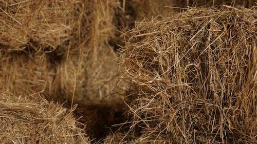 Close-up of winter animal food rectangular bales in the barn  4K 2160p 30fps UltraHD tilting footage