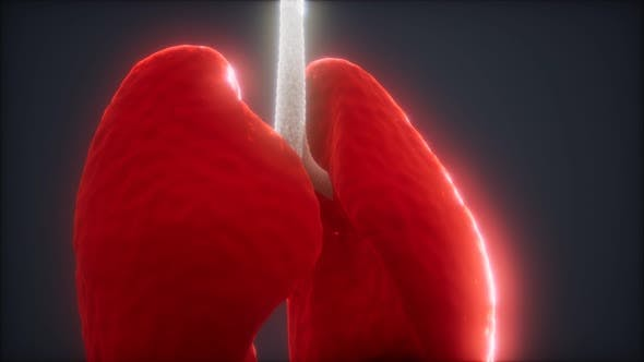 Thumbnail for Human Lungs