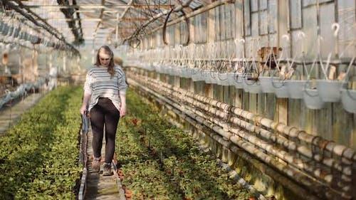 Female Gardener Working with Seedlings in Greenhouse
