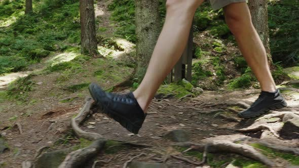 Thumbnail for The Legs of the Tourist's Man Go Along the Forest Trail Along the Roots and Stones.
