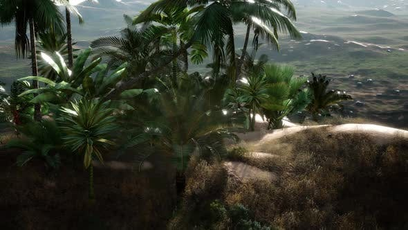 Thumbnail for Plantation of Palm Trees at Ein Gedi in the Dead Sea Area, Israel.