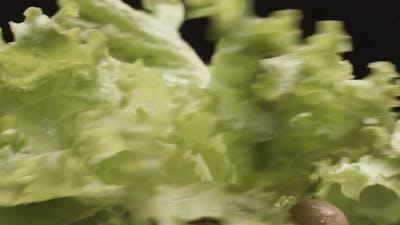 Shaking wet lettuce leaves