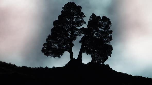 Silhouette of a Tree on Hill. Zoom Out.