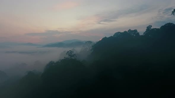 Mystical Tropical Rainforest in Dawn