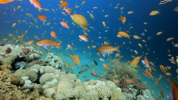 Cover Image for Colorful Tropical Coral Reefs