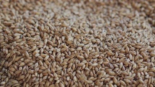 Man Pours Barley Malt - inside Beer Brewery - Slow Motion HQ