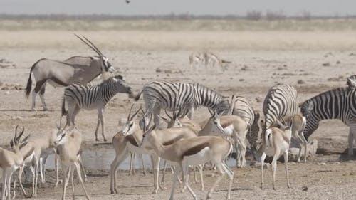 Chaotic African Waterhole