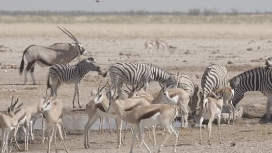 Thumbnail for Chaotic African Waterhole