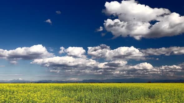 Thumbnail for Yellow Flowering Plain and Partly Cloudy Sky