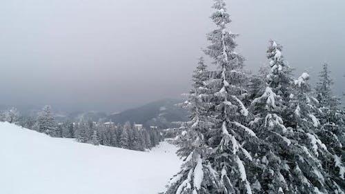 Beautiful Cloudy Winter Fir-trees