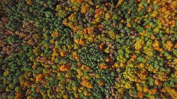 Thumbnail for Flight Over Autumn Forest
