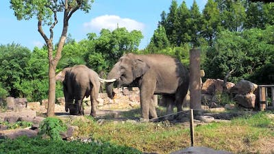 A Beautiful Elephants in the Zoo
