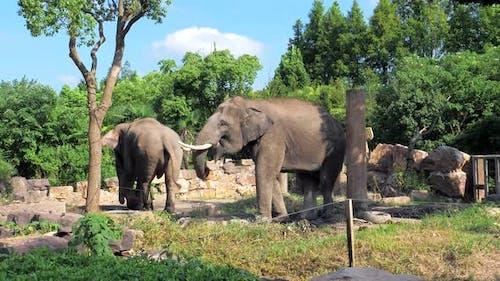 A Beautiful Elephants in the Zoo