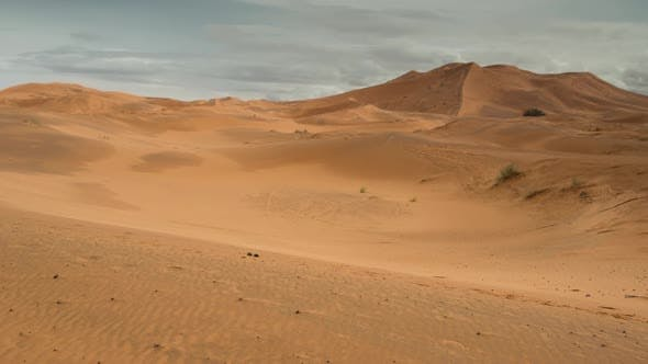 Thumbnail for Merzouga Camel 01