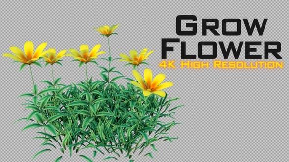 Thumbnail for Grow Flowers 4K