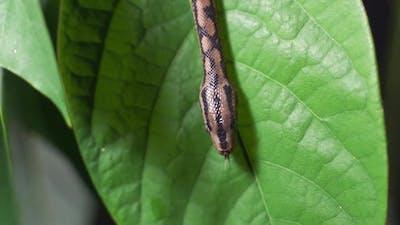 a Snake Crawl Through Bush