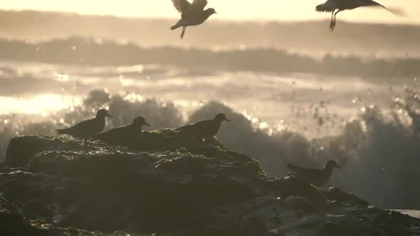 Thumbnail for Birds and Ocean
