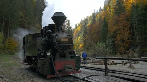 Locomotive in a forest
