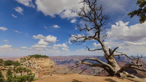 Thumbnail for Time Lapse At The North Rim Of The Grand Canyon