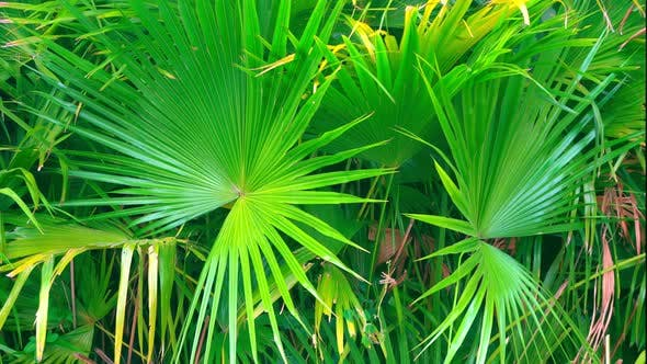 Thumbnail for Green Tropic Plants. Beautiful Exotic Nature of Hot China