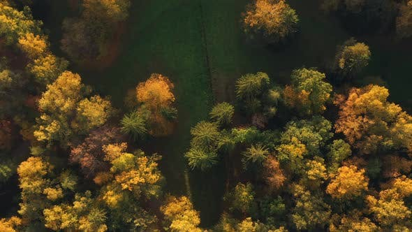Thumbnail for Autumn Forest View From Copter