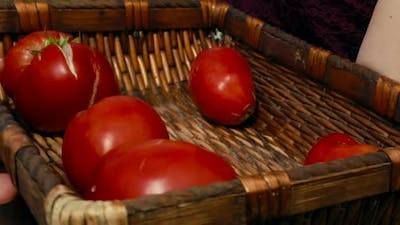 Red tomatoes at an organic sustainable farm